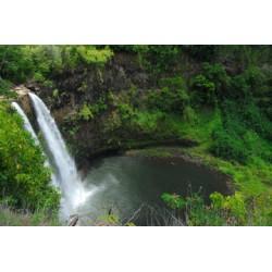 Papeete Segway Tour
