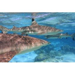 Moorea Lagoonarium Snorkeling Tour