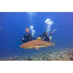 10 jours de navigation de Huahine à Bora Bora en voilier